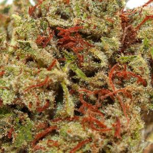 Hawaiian Haze-Hemp Flower Close Up
